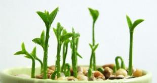 Trang trí nhà với cây chanh tự trồng từ hạt