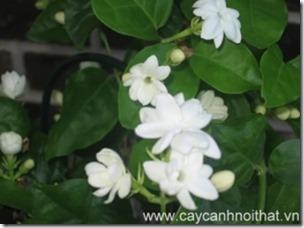 cay-canh-van-phong-hoa-lai-300x224