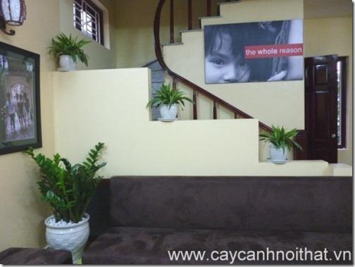 cay-canh-van-phong-kim-phat-tai-5