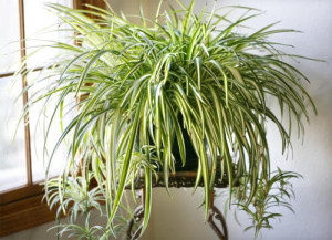 Lự chọn cây xanh cho nhà thiếu sáng