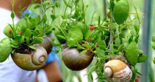 Tự Thiết Kế Khu Vườn Mini Cho Ngôi Nhà Bạn