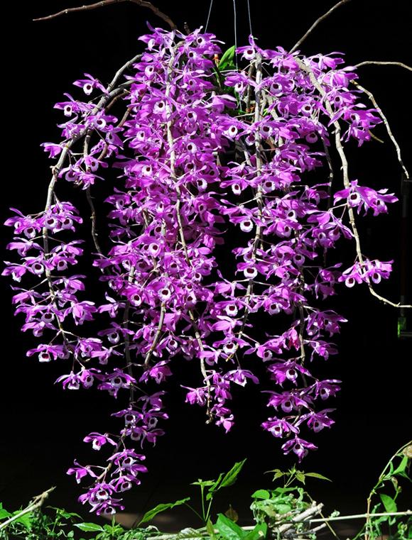 hoa lan rừng