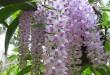 Cách chăm sóc Hoa lan rừng